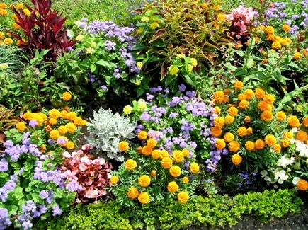 Giardiniere a roma servizi completi di giardinaggio for Giardino fiori