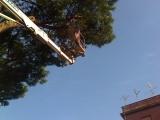 potatura albero giardiniere
